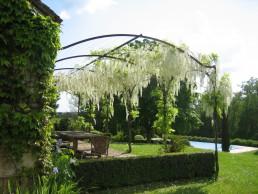 witbloeiende wisteria over stalen pergola