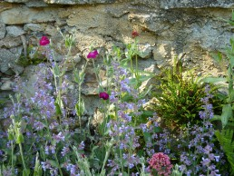 oude muur met salvia valeriaan en prikneus